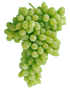 THOMPSON SEEDLESS (SULTANA)